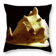 Horned Helmet Seashell Cassis Cornuta Throw Pillow