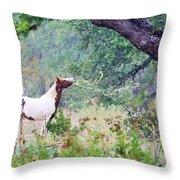Horse 018 Throw Pillow