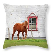 Horse At Panmure Island Lighthouse 5756 Throw Pillow