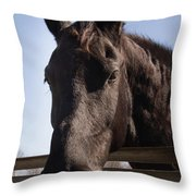 Horse By A Fence. Throw Pillow