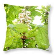 Horse Chestnuts Throw Pillow