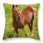 Horse In A Field With Flowers Throw Pillow