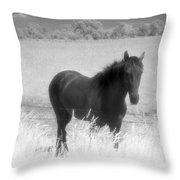 Horse In A Summer Dreamfield  Throw Pillow