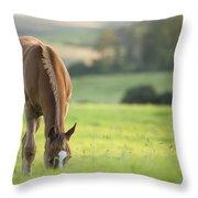 Horse In Field Near Ballyvaloo, Blackwater, Wexford Throw Pillow
