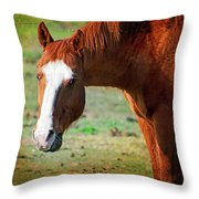 Horse Look Throw Pillow