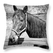 Horse Portrait In Black And White Throw Pillow