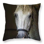 Horse Portrait Throw Pillow