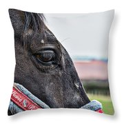 Horse Riding Horse Throw Pillow