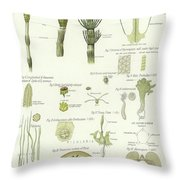 Horse Tail And Pillwort Throw Pillow