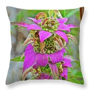 Horsemint On Trail To North Beach Park In Ottawa County, Michigan Throw Pillow