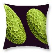 Horseradish Pollen Throw Pillow