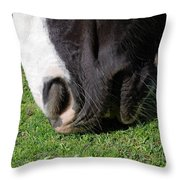 Horses Mouth Throw Pillow