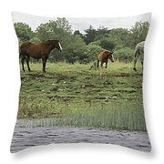 Horses On Ireland's River Shannon Throw Pillow