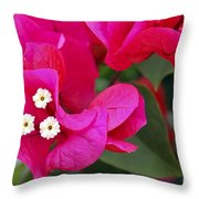 Hot Pink Bougainvillea Throw Pillow