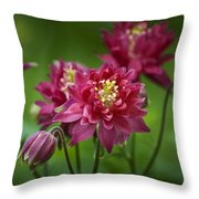 Hot Pink Columbine Throw Pillow
