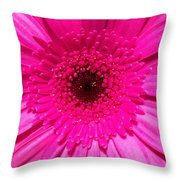 Hot Pink Gerbera Throw Pillow