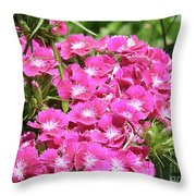 Hot Pink Sweet William Flowers In A Garden Blooming Throw Pillow