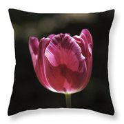 Hot Pink Tulip Squared 02 Throw Pillow
