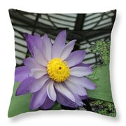 Hothouse Waterlily Throw Pillow