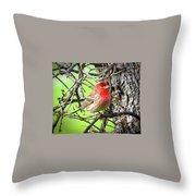House Finch - 3 Throw Pillow