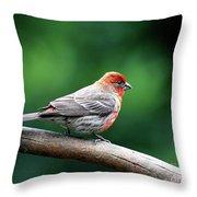 House Finch . 40d7227 Throw Pillow