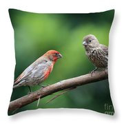 House Finch Courtship Throw Pillow