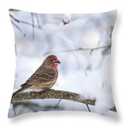 House Finch In Snow Throw Pillow