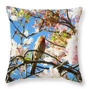 House Finch In The Cherry Blossoms Throw Pillow