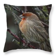 House Finch On A Rainy Day Throw Pillow
