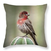 House Finch Perched On Cactus  Throw Pillow