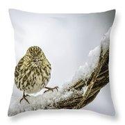 House Finch Snow Is Coming Throw Pillow by LeeAnn McLaneGoetz McLaneGoetzStudioLLCcom