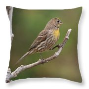 House Finch With Yellow Breast 1  Throw Pillow