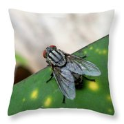House Fly On Leaf Throw Pillow
