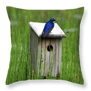 House Sitting Throw Pillow