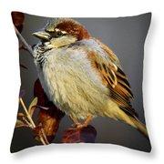 House Sparrow 1 Throw Pillow