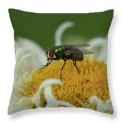 Housefly On Daisy Throw Pillow