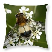 Hoverfly Leucozona Lucorum Throw Pillow