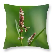 Hoverfly On Flower Throw Pillow