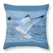Hovering Seagull Throw Pillow
