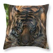 How Quickly Can You Run? Throw Pillow