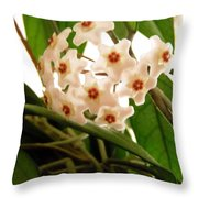 Hoya Throw Pillow