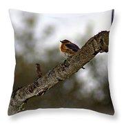 Huddled Bluebird Throw Pillow