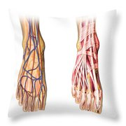 Human Foot Anatomy Showing Skin, Veins Throw Pillow