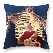 Human Skeleton Showing Digestive System Throw Pillow