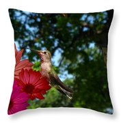 Hummers And Colored Daisies Throw Pillow