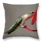 Humming Bird 10 Throw Pillow