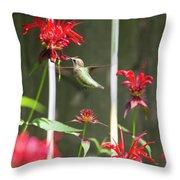 Humming Bird 7 Throw Pillow