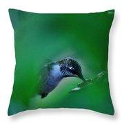 Humming Bird Feeding Throw Pillow
