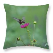 Humming Bird On A Cosmo Throw Pillow