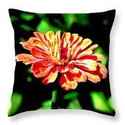 Humming Bird's Favourite Throw Pillow